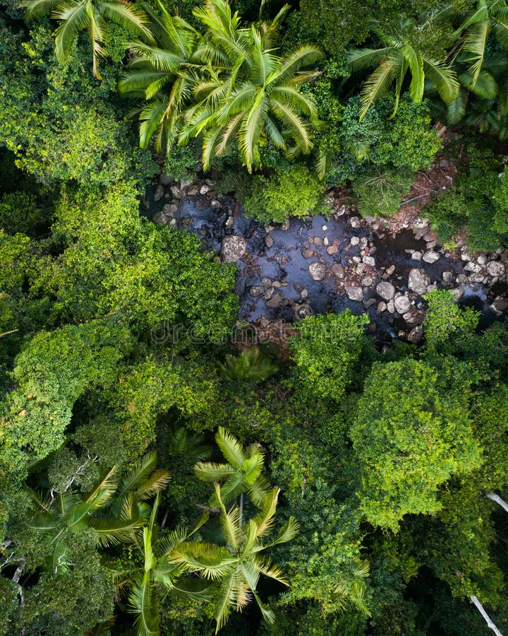 Beautiful aerial scene over a rainforest and small creek. Aerial shot of a jungle and a creek in the morning royalty free stock photos