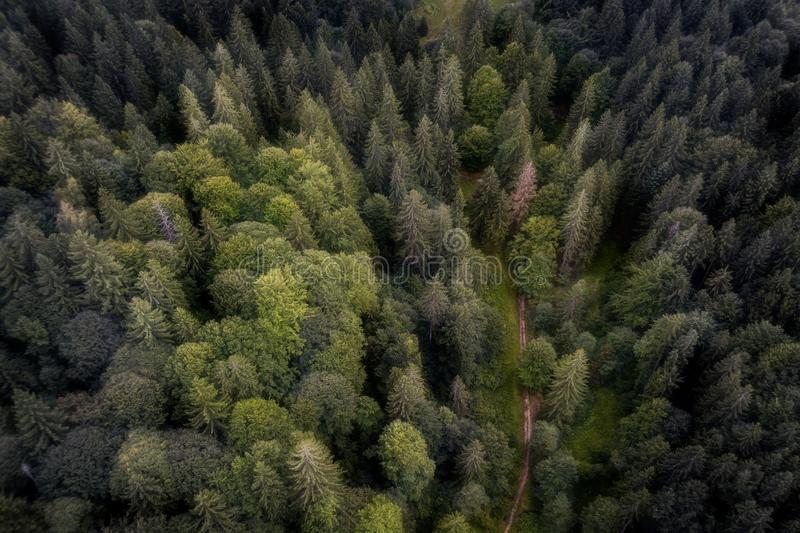 Aerial shot of a road in a romanian forest stock photo