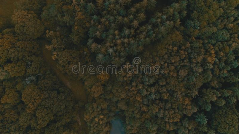 Aerial shot of trees in the forest stock photography