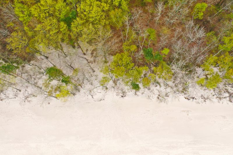 Aerial top down view on white clean sand beach and deciduous forest during spring.  stock images