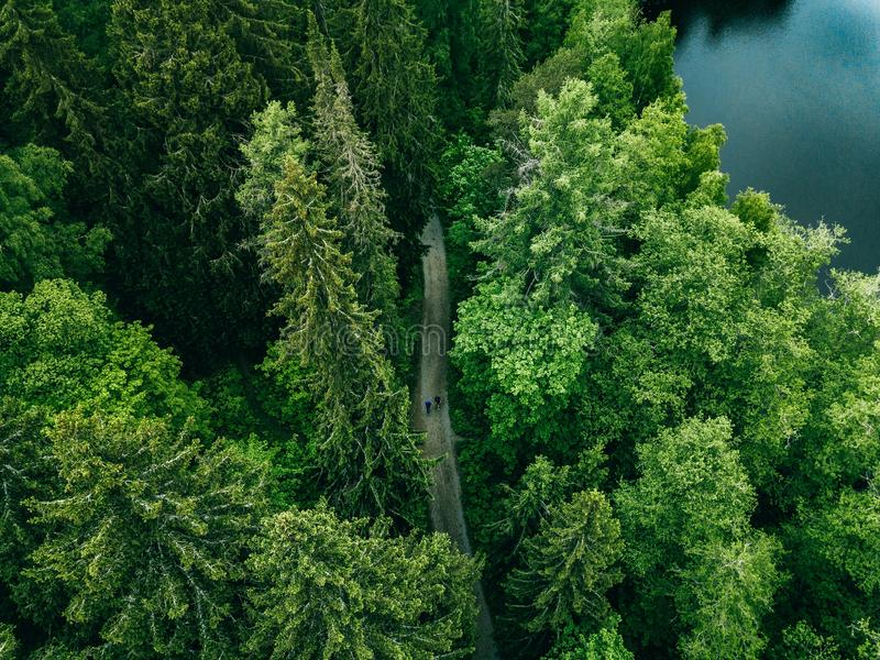 Aerial top view of country road in green summer forest and blue lake. Rural landscape in Finland stock photography