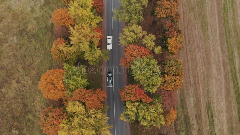 Two luxury cars ride along the road. Aerial view of car driving along the forest road of dense woods growing both sides. Aerial top view following over road in stock photo