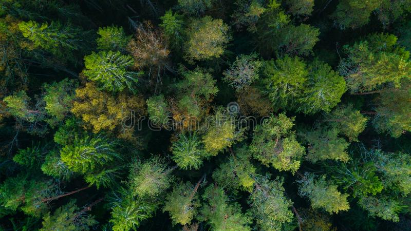 Aerial top view forest, Texture of forest view from above. royalty free stock photo