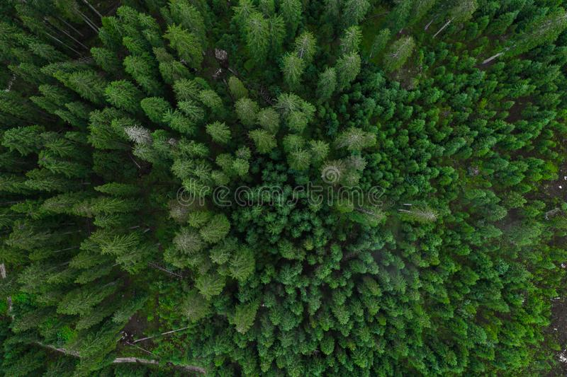Aerial top view forest, Texture of forest view from above, Copter drone view, Panoramic photo over the tops of pine forest royalty free stock photo