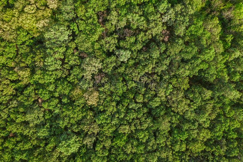 Aerial top view forest, Texture of forest view from above, drone view. Tree, green, nature, landscape, natural, background, park, leaf, environment, wood royalty free stock photo