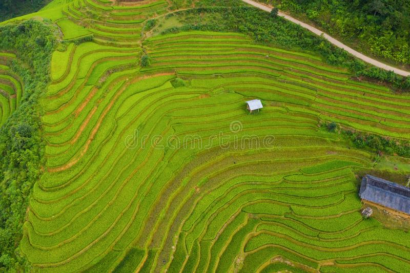 Aerial top view of paddy rice terraces, green agricultural fields in countryside or rural area of Mu Cang Chai, Yen Bai, mountain stock photos
