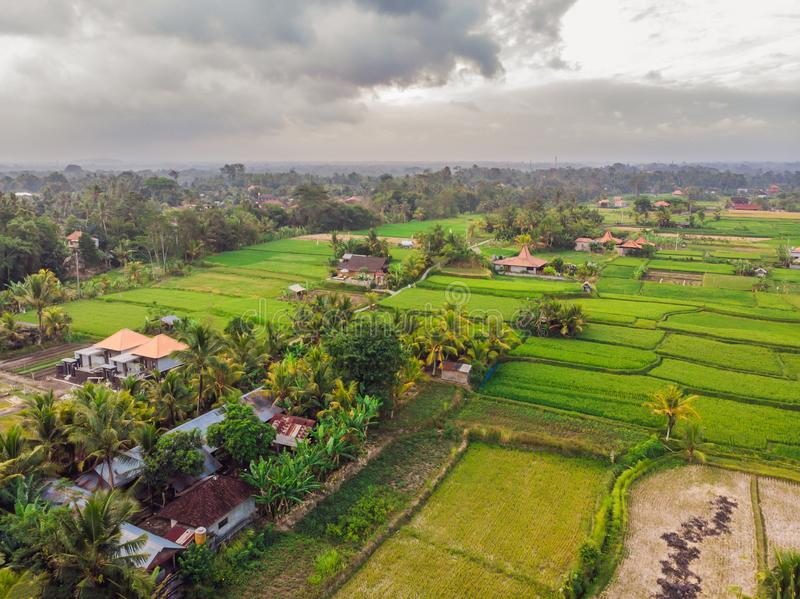 Aerial top view photo from flying drone of green rice fields in countryside Land with grown plants of paddy. Bali royalty free stock images