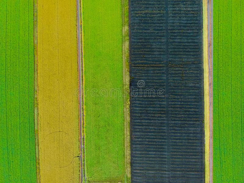Aerial top view photo from flying drone of a land with sown green fields stock photography