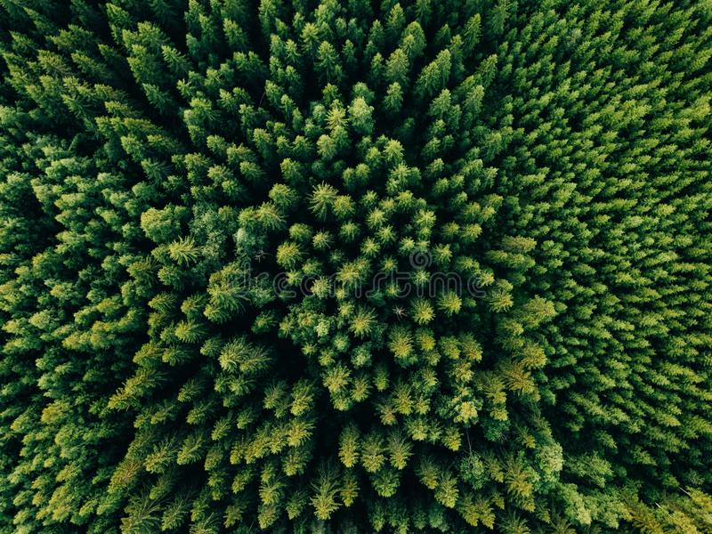 Aerial top view of summer green trees in forest in rural Finland. royalty free stock photo