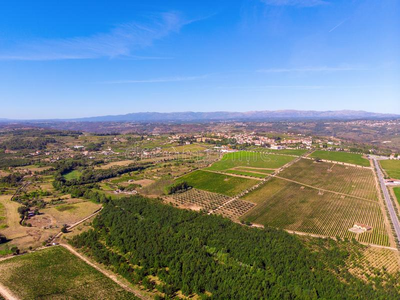 Aerial top view of vineyards landscape from above background, Portugal royalty free stock photography