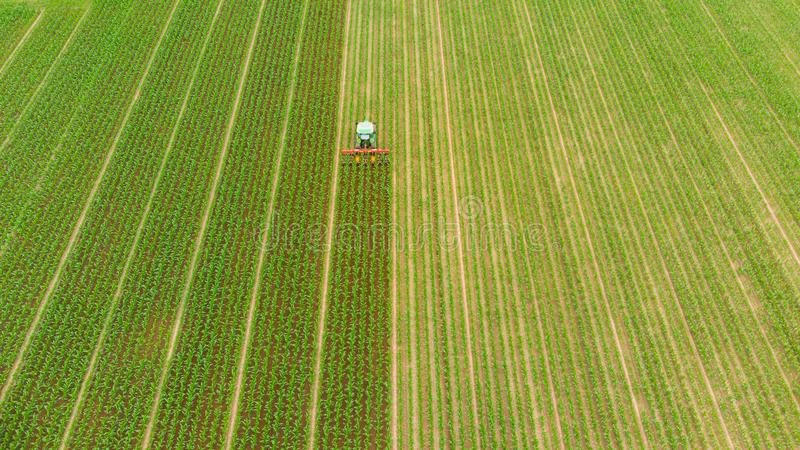 Aerial: tractor working on cultivated fields farmland, agriculture occupation, top down view of lush green cereal crops, sprintime. In Italy royalty free stock images