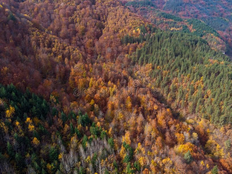 Aerial vertical view of the autumn forest. In Bulgaria royalty free stock photography