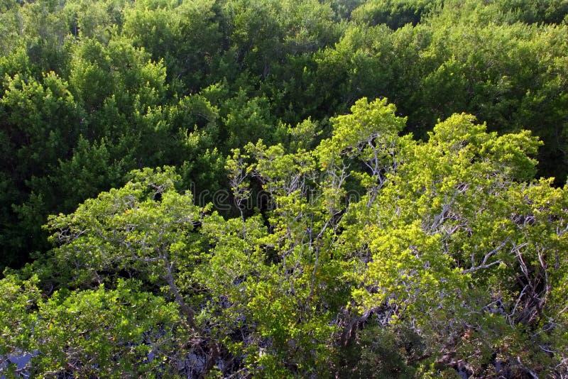 Aerial View. Sanibel Captiva Conservation Foundation Florida stock image