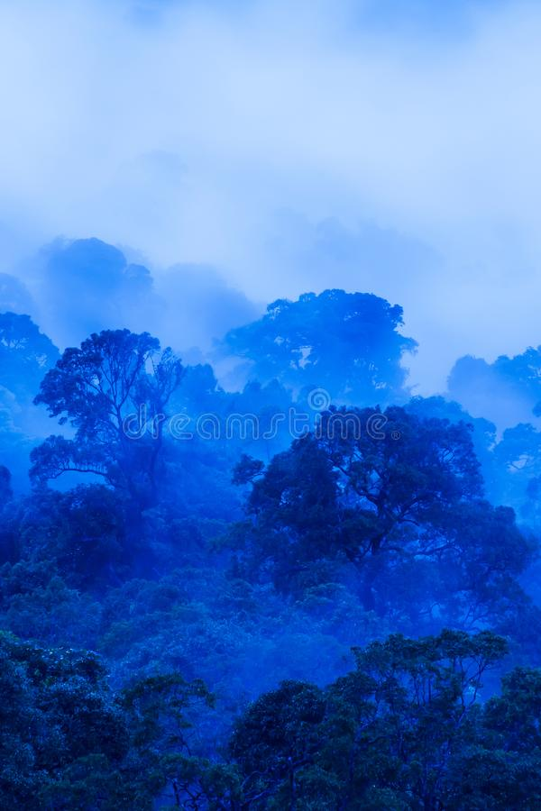 Aerial view of ancient tropical forest in blue misty, art of shape of wild trees on rainy morning stock photos