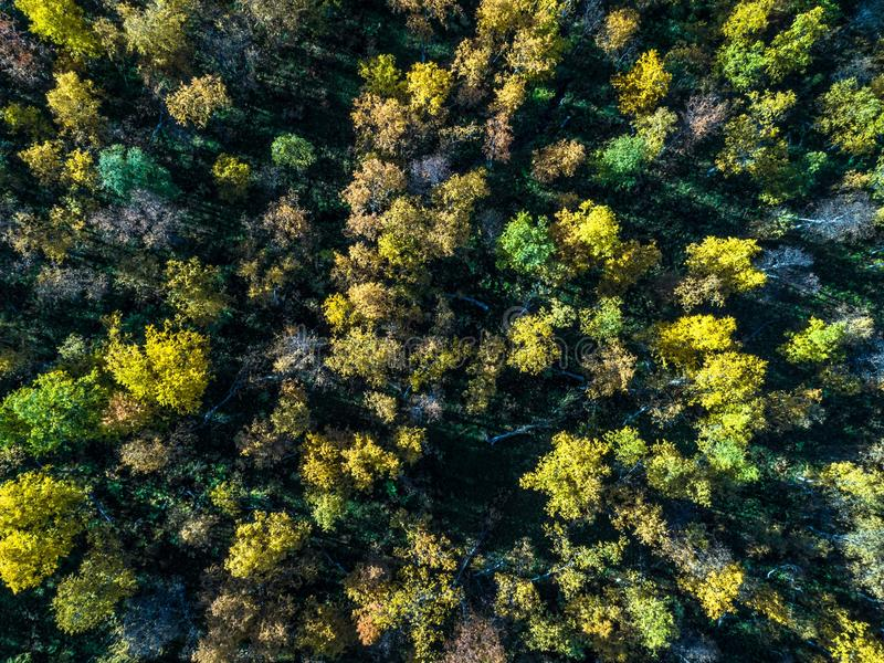 Aerial view of arctic broadleaved forest from top in autumn with sun and rays royalty free stock photos