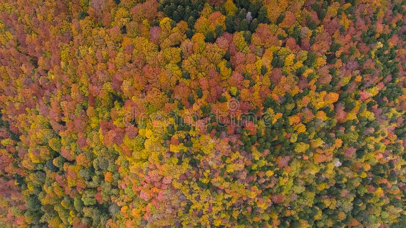 Aerial view of Autumn forest in Stara planina stock images