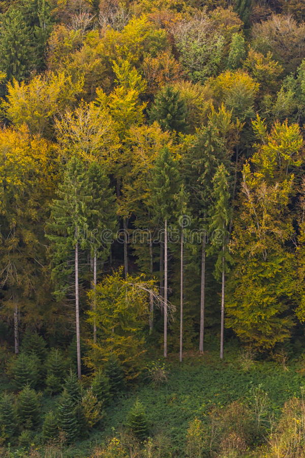 Aerial view of autumn trees stock images