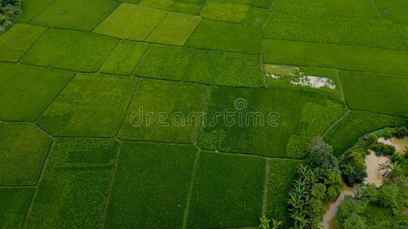 Aerial view beautiful terraced rice fields, Tangerang, Indonesia royalty free stock photos