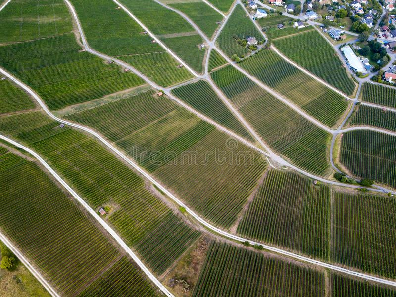Aerial view of beautiful vineyards landscape stock image