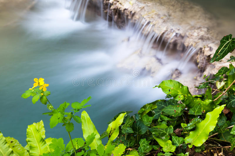 Aerial view of a beautiful waterfall. Cascading over a shelf of rock into a tranquil pool below viewed over the top of fresh green leaves and a yellow flower stock photos