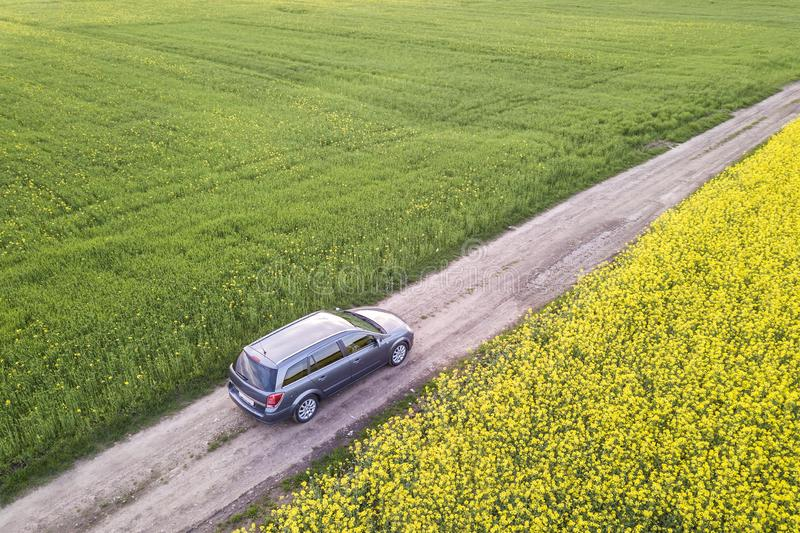 Aerial view of car driving by straight ground road through green fields with blooming rapeseed plants on sunny day. Drone. Photography stock image