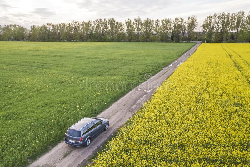 Aerial view of car driving by straight ground road through green fields with blooming rapeseed plants on sunny day. Drone. Photography royalty free stock photo