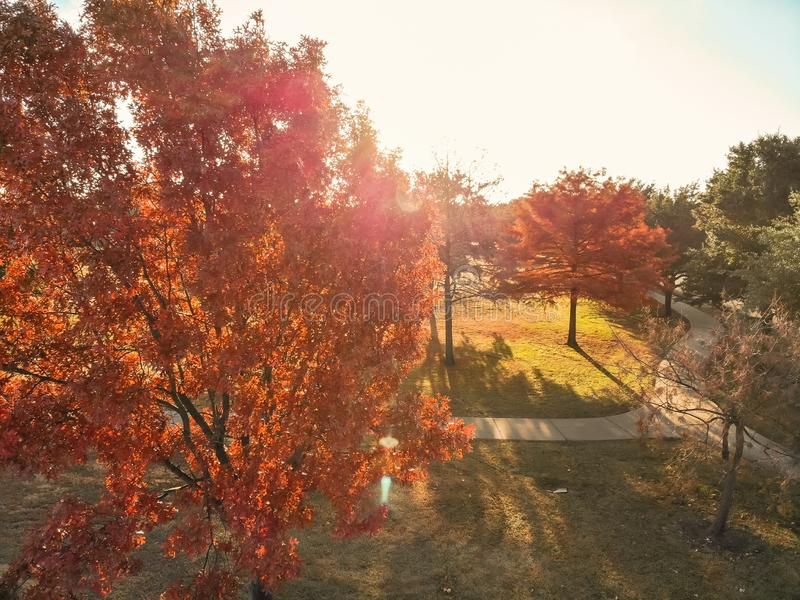 Top view close-up colorful autumn trees in the park with curved pathway near Dallas stock image