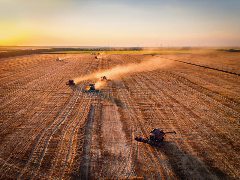 Aerial view of Combine harvester agriculture machine harvesting royalty free stock photos