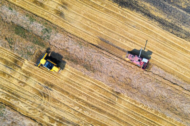 Aerial view of combine harvester is harvesting wheat in summer stock images
