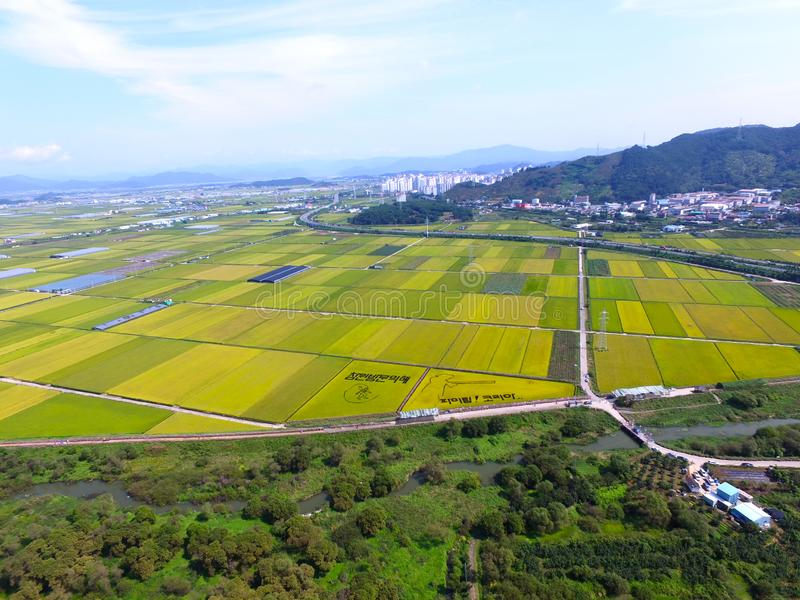 Aerial View of Cosmos Road and Rice Paddy Painting in Mujeom village, Changwon, Gyeongnam, South Korea, Asia stock photo