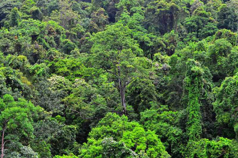 Aerial view of Daintree National Park canopy Queensland Austral royalty free stock photo