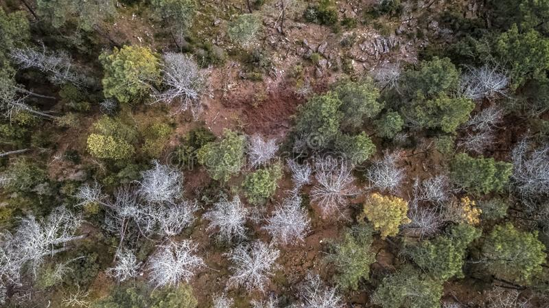 Aerial view of drone, with typical Portuguese forest, crown of trees, pines and oaks royalty free stock photo