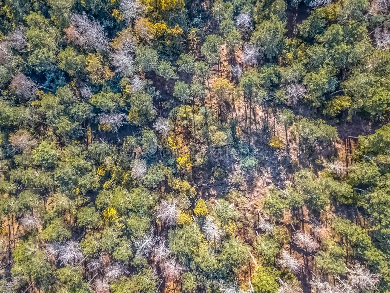Aerial view of drone, with typical Portuguese forest, crown of trees, pines and oaks stock image