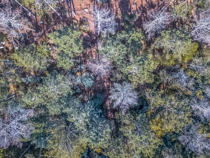 Aerial view of drone, with typical Portuguese forest, crown of trees, pines and oaks royalty free stock images