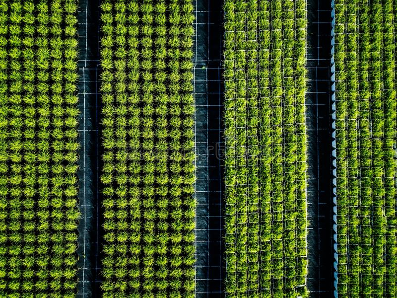 Aerial view of farmland and rows of crops. Green seedlings in rows in the greenhouse of Italy stock images