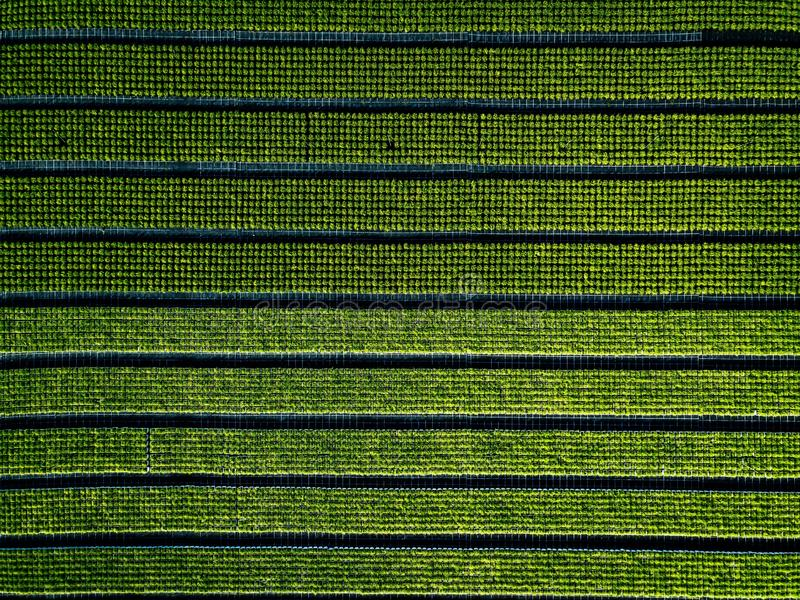 Aerial view of farmland and rows of crops. Green seedlings in rows in the greenhouse of Italy royalty free stock photos