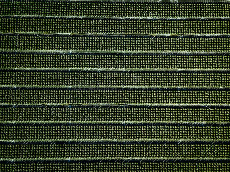 Aerial view of farmland and rows of crops. Green seedlings in rows in the greenhouse of Italy royalty free stock photo