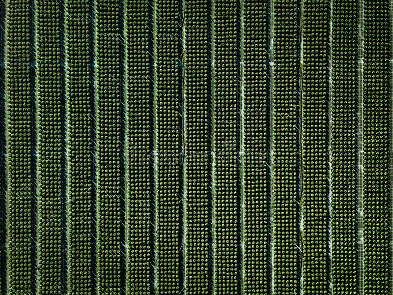 Aerial view of farmland and rows of crops. Green seedlings in rows in the greenhouse of Italy royalty free stock images