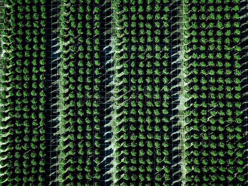 Aerial view of farmland and rows of crops. Green seedlings in rows in the greenhouse of Italy stock photography
