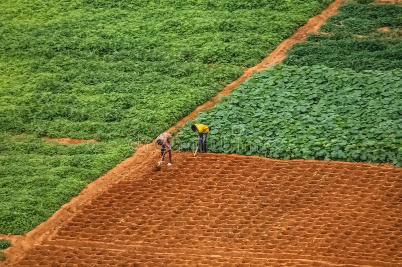 Aerial view of farmland for traditional agriculture with traditional farmers cultivating the land. With different plots in Angola, Africa, luanda, terrain royalty free stock photography