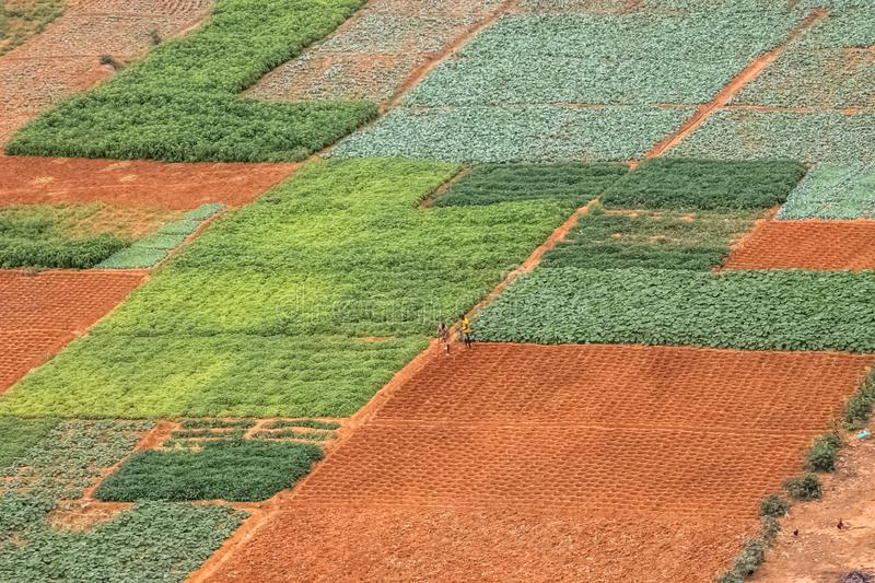 Aerial view of farmland for traditional agriculture with traditional farmers cultivating the land. With different plots in Angola, Africa, luanda, terrain royalty free stock images