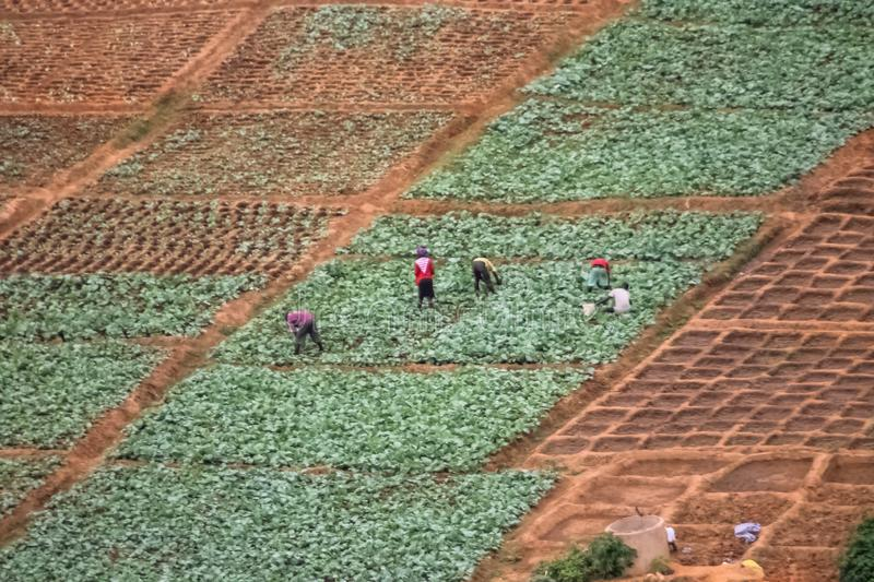 Aerial view of farmland for traditional agriculture with traditional farmers cultivating the land. With different plots in Angola, Africa, luanda, terrain royalty free stock photo