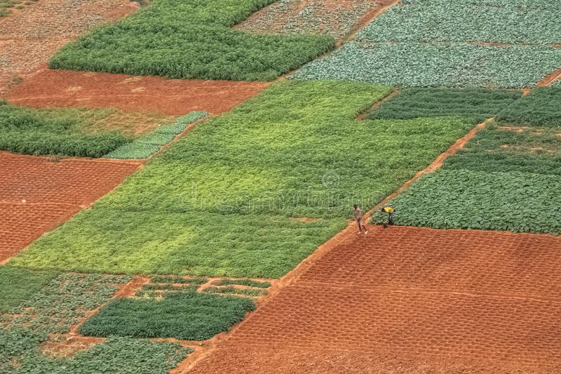Aerial view of farmland for traditional agriculture with traditional farmers cultivating the land. With different plots in Angola, Africa, luanda, terrain royalty free stock image