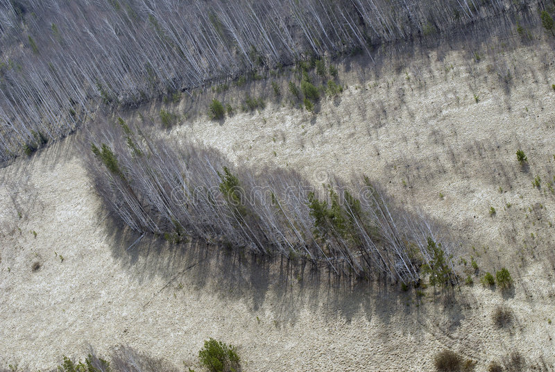 Aerial view of fields and forest. stock images