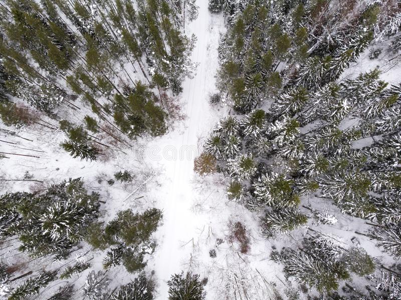 Aerial view of a road in a forest in winter. Aerial view of a road running through winter forest in estonia royalty free stock photography