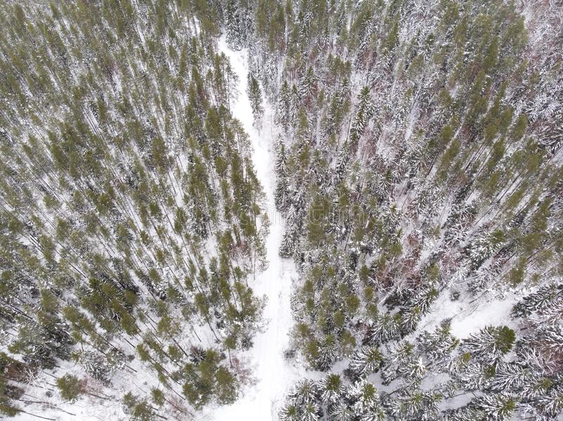 Aerial view of a road in a forest in winter. Aerial view of a road running through winter forest in estonia royalty free stock photo