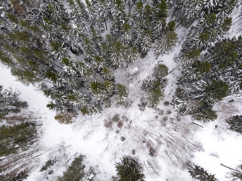 Aerial view of a road in a forest in winter. Aerial view of a road running through winter forest in estonia stock photo