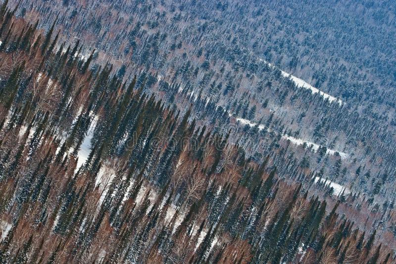Aerial view on the forest royalty free stock image