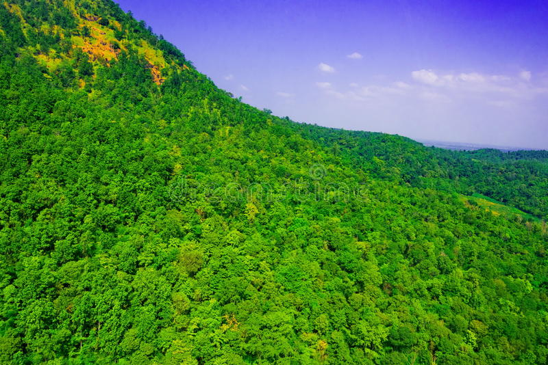 Aerial view of forest. Aerial view of the forest stock image