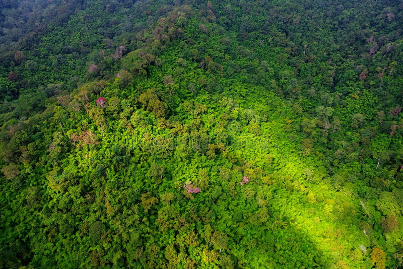 Aerial view of forest. Aerial view of the forest royalty free stock photos